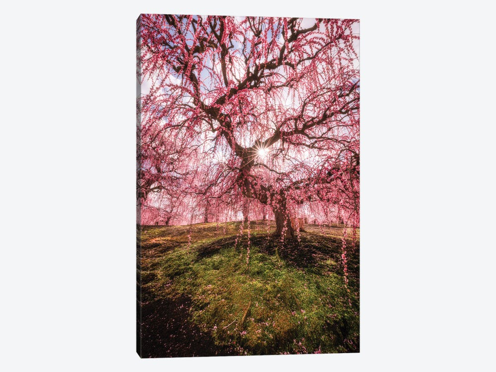 Spring In Japan XXX by Daisuke Uematsu 1-piece Canvas Art Print