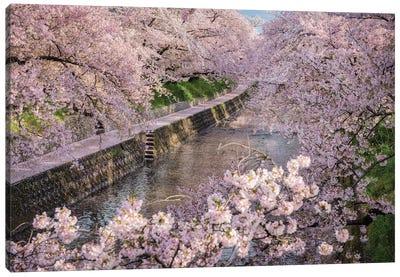 Spring In Japan XXXI Canvas Art Print