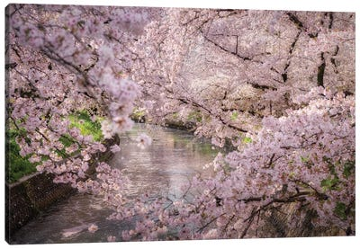 Spring In Japan XXXII Canvas Art Print