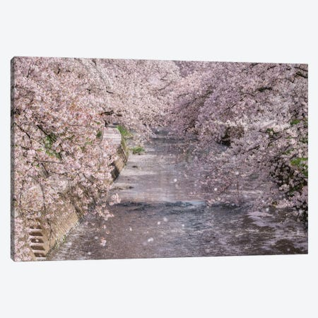 Spring In Japan XXXIII Canvas Print #DUE153} by Daisuke Uematsu Canvas Art Print