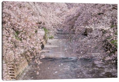 Spring In Japan XXXIII Canvas Art Print