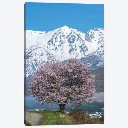 Spring In Japan IV Canvas Print #DUE54} by Daisuke Uematsu Canvas Art Print