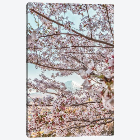 Spring In Japan VII Canvas Print #DUE57} by Daisuke Uematsu Art Print