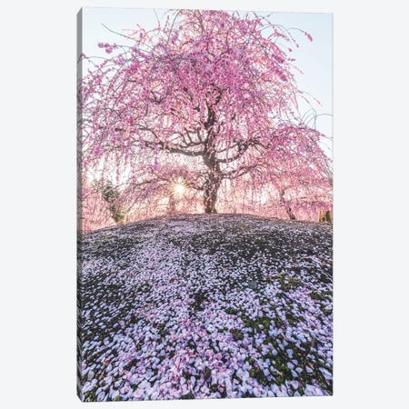Spring In Japan IX Canvas Print #DUE59} by Daisuke Uematsu Canvas Art