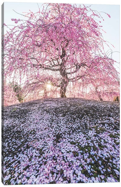 Spring In Japan IX Canvas Art Print