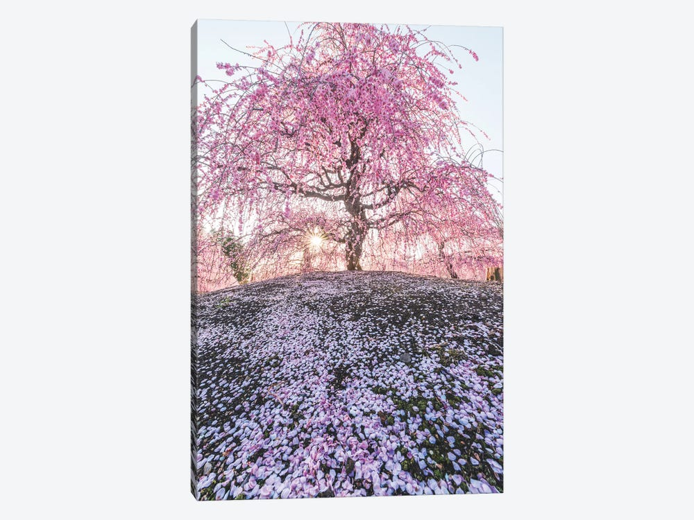 Spring In Japan IX 1-piece Canvas Print