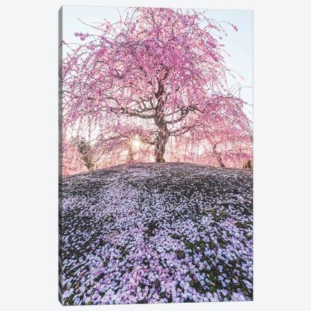 Spring In Japan IX Canvas Print #DUE59} by Daisuke Uematsu Canvas Art