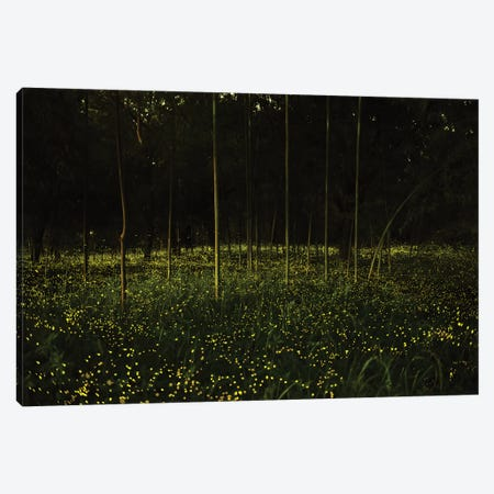 Spring In Japan X Canvas Print #DUE60} by Daisuke Uematsu Art Print