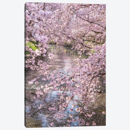 Spring In Japan XV Canvas Print #DUE65} by Daisuke Uematsu Canvas Wall Art
