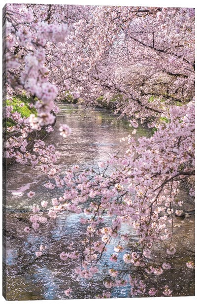 Spring In Japan XV Canvas Art Print