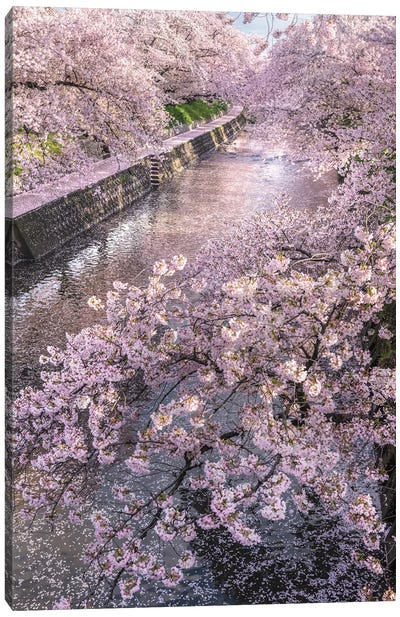 Spring In Japan XVI Canvas Art Print