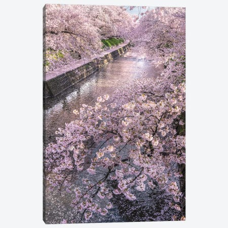 Spring In Japan XVI Canvas Print #DUE66} by Daisuke Uematsu Canvas Art