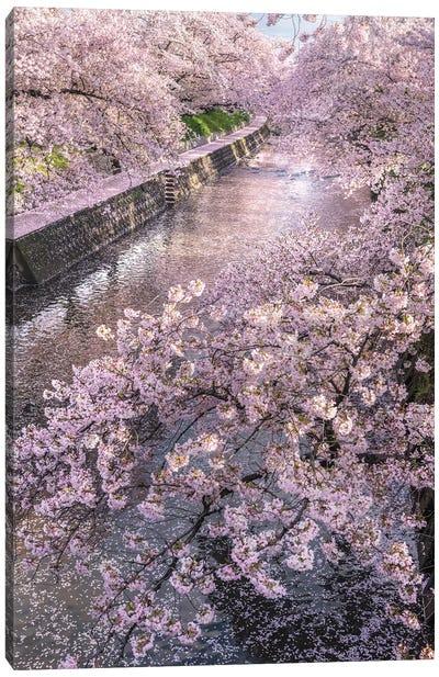 Spring In Japan XVI Canvas Art Print
