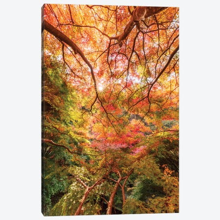 Autumn In Japan VI Canvas Print #DUE6} by Daisuke Uematsu Art Print