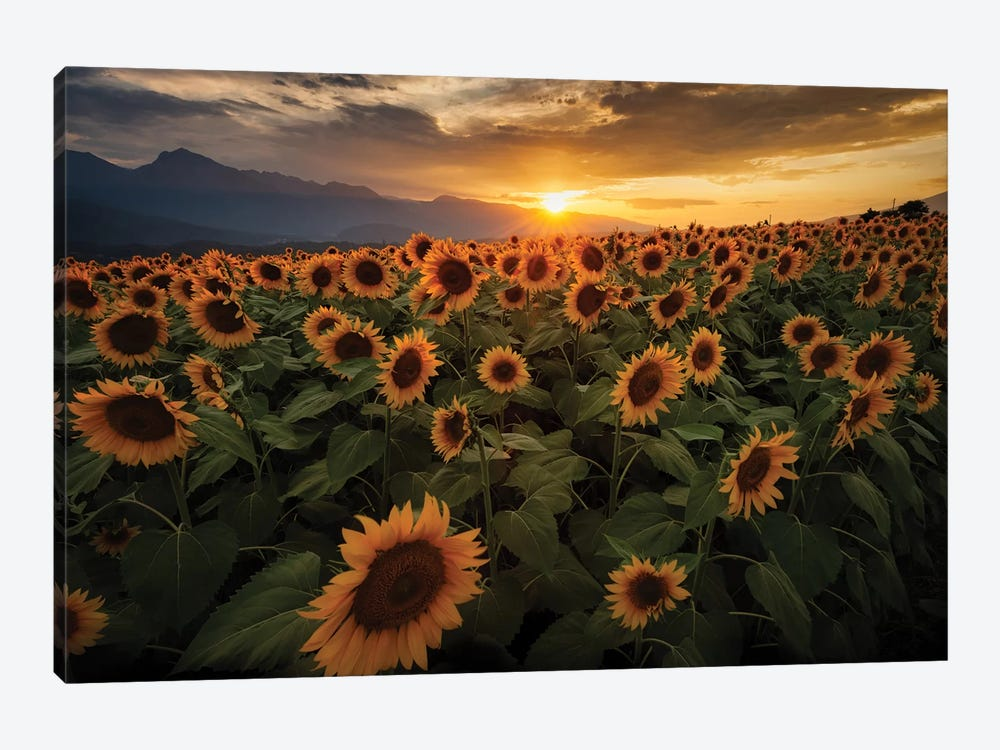Summer In Japan VI by Daisuke Uematsu 1-piece Canvas Print
