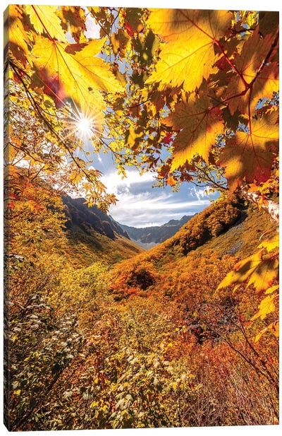 Autumn In Japan VII Canvas Art Print