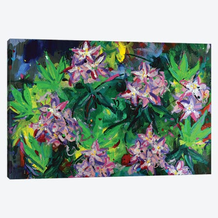 Rhododendrons Canvas Print #DUW27} by Dawn Underwood Canvas Wall Art