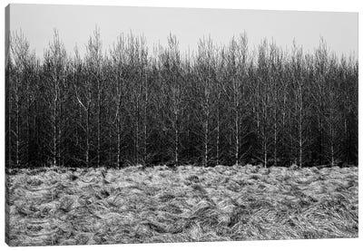 Forest Line Canvas Art Print
