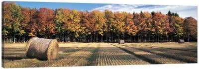 Autumn In The Fields Canvas Art Print