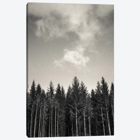 Pines And Clouds Canvas Print #DVB62} by Dave Bowman Canvas Artwork