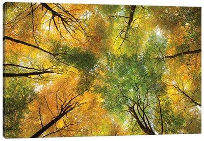 Autumnal Display Canvas Art Print