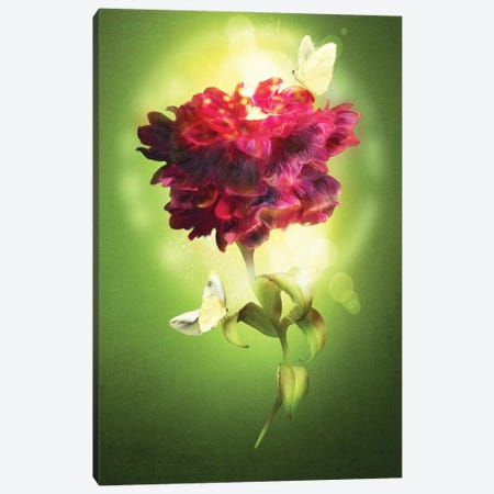 Spring Flower Canvas Print #DVE116} by Diogo Verissimo Canvas Art