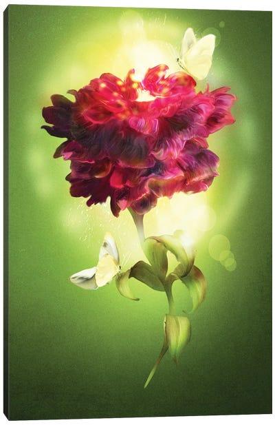 Spring Flower Canvas Art Print