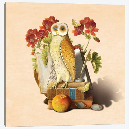 Apprentice Owl 3-Piece Canvas #DVE4} by Diogo Verissimo Canvas Artwork