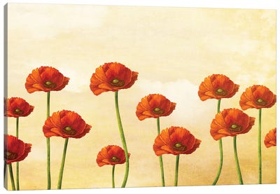 Where The Poppies Bloom Canvas Art Print