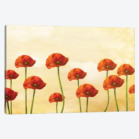 Where The Poppies Bloom 3-Piece Canvas #DVE81} by Diogo Verissimo Canvas Print