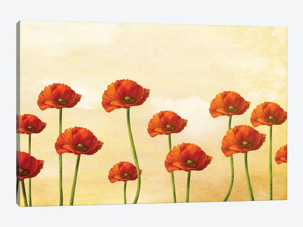 Where The Poppies Bloom 1-piece Canvas Wall Art