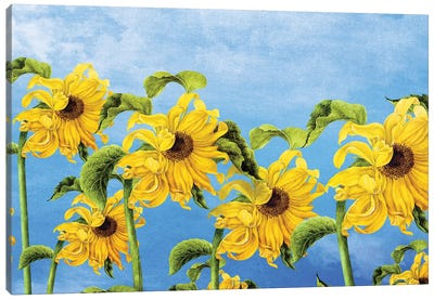 Where The Sunflowers Grow Canvas Art Print
