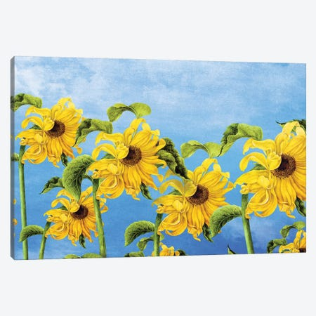 Where The Sunflowers Grow 3-Piece Canvas #DVE82} by Diogo Verissimo Canvas Art Print