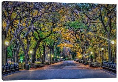 Central Park Night Canvas Art Print