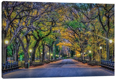 Central Park Night Canvas Art Print