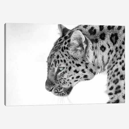 Big Cat B&W Canvas Print #DVG13} by David Gardiner Canvas Wall Art