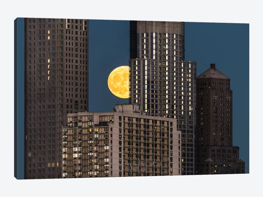 Peeping Moon by David Gardiner 1-piece Canvas Print