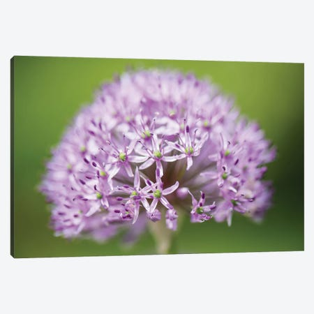 Exquisite Canvas Print #DVG187} by David Gardiner Canvas Artwork