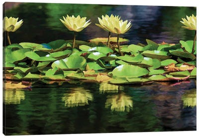 Lilly Pond Canvas Art Print