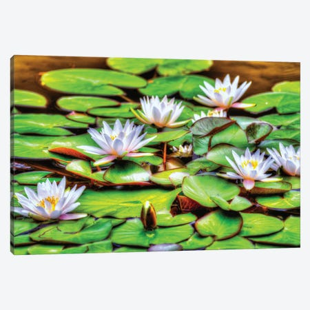 Lilly Six Canvas Print #DVG197} by David Gardiner Canvas Art Print