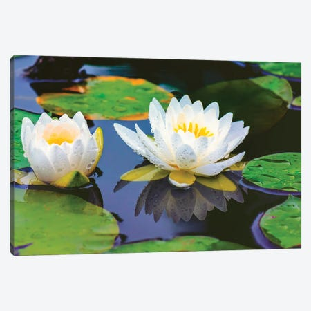 Lovely Lilly Canvas Print #DVG198} by David Gardiner Canvas Art