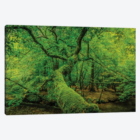 Old Green Canvas Print #DVG200} by David Gardiner Canvas Artwork