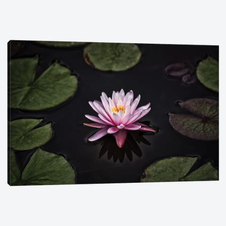 Solo Lilly Canvas Print #DVG202} by David Gardiner Canvas Art