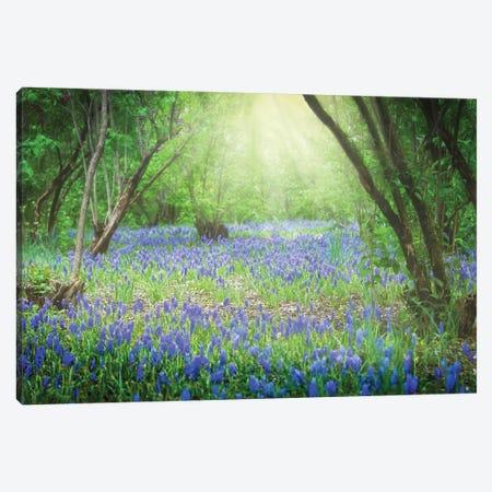 Sunlit Blue Canvas Print #DVG204} by David Gardiner Canvas Print