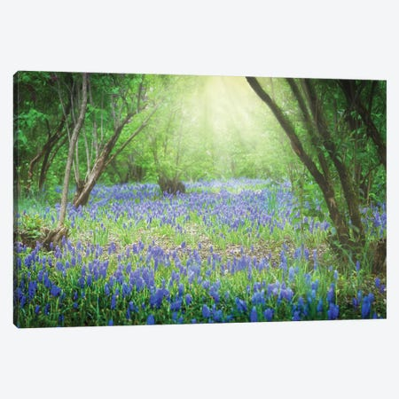 Sunlit Blue Canvas Print #DVG204} by David Gardiner Canvas Print