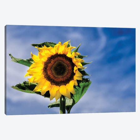 Sunny Sky Canvas Print #DVG205} by David Gardiner Canvas Art Print