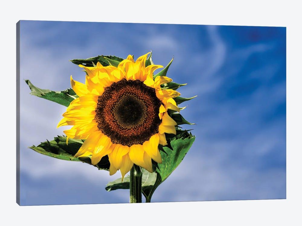 Sunny Sky by David Gardiner 1-piece Canvas Artwork