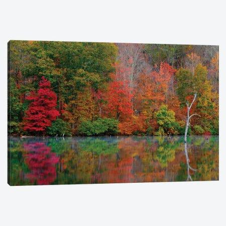Autumn Scene Canvas Print #DVG210} by David Gardiner Art Print