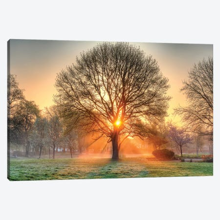 Basking in the Glow Canvas Print #DVG211} by David Gardiner Canvas Print