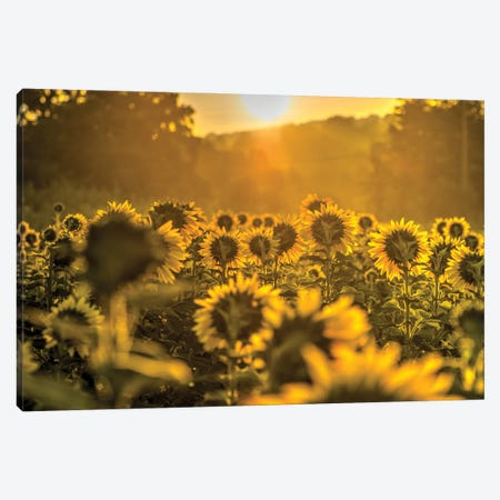 Into the Sun Canvas Print #DVG240} by David Gardiner Canvas Wall Art